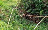 Vụ phát hiện thi thể không nguyên vẹn trong vườn điều: Xác định danh tính nạn nhân