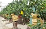 Độc đáo chuột vàng cõng quất bonsai giá bạc triệu chơi tết