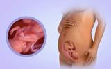 Sự phát triển của thai nhi tuần 21 mẹ bầu nên biết