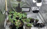 """Bên trong """"khu vườn bí mật"""" của nam thanh niên dùng để trồng cần sa giữa Hà Nội"""