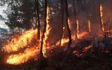 Tặng Huân chương Dũng cảm cho người phụ nữ quên mình chữa cháy rừng