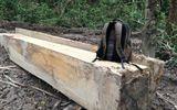 Kon Tum: Kỷ luật 2 giám đốc công ty lâm nghiệp vì liên tục để mất rừng