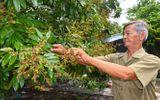 Gia đình - Tình yêu - Bí quyết kiếm hàng chục triệu mỗi tháng của lão nông sống giữa rừng U Minh
