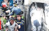 Tin trong nước - Tiếng còi ủ đêm Giao thừa của những người lính cứu hỏa