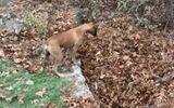 Video: Phản ứng siêu đáng yêu của con chó trung thành khi chủ nhân đột ngột biến mất