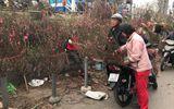Chợ hoa Quảng An tấp nập những ngày cuối năm, đào, mai khoe sắc chào xuân mới