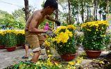Đời sống - Tiểu thương xé nát hoa khi giảm giá xuống 5.000 đồng/chậu mà vẫn không có người mua