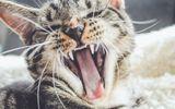 Đời sống - Tin tức đời sống mới nhất ngày 25/1/2020: Mèo cưng hung dữ giam cầm chủ nhân suốt 2 ngày