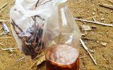 Uống rượu ngâm nấm ngọc cẩu: 6 người trong một gia đình nhập viện vì ngộ độc