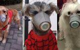 Nhà giàu sẵn sàng bỏ 50 USD sắm khẩu trang chống nCoV cho chó gây sốt