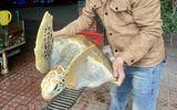 Việc tốt quanh ta - Chủ nhà hàng tại Nghệ An mua rùa quý hiếm thả về biển