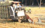 Tin trong nước -  Nghề cuộn rơm ở miền Tây, nông dân thu nhập tiền triệu mỗi ngày