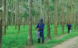 Kinh doanh - Tập đoàn Cao Su muốn chuyển đổi mục đích sử dụng hơn 18.000 ha đất, lãnh đạo Đồng Nai nói gì?