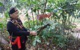 Xã hội - Các nhà khoa học khẳng định thứ cây đặc biệt trên núi có chức năng tăng cường sinh lý