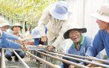 Cảm động những lão nông hơn 12 năm xây cầu từ thiện tại Đồng Tháp