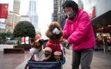 """Hong Kong cách ly chú chó """"dương tính yếu"""" với Covid-19"""
