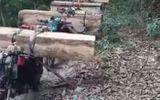 An ninh - Hình sự - Bắt quả tang cả đoàn xe máy của lâm tặc vận chuyển gỗ lậu ở Kon Tum