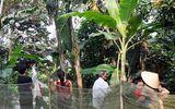 Tin tức đời sống mới nhất ngày 13/3/2020: Người dân hiếu kỳ đi xem cây chuối voi trổ 2 buồng