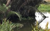Rùng mình phát hiện 2 thi thể nam giới nổi trên sông Sài Gòn