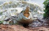 Video: Cá sấu khổng lồ bất ngờ lao tới tấn công nhóm trẻ chơi bên sông