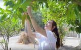 Minh Hằng sở hữu vườn rộng 20.000m2 ở Đồng Nai, dự định xây khu du lịch sinh thái