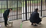 Nhặt con chó mù về nhà, người đàn ông âm thầm làm điều này 2 năm khiến ai nghe cũng cảm động