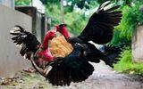 Bắt khẩn cấp nhóm người nhốt, đánh nam thanh niên suốt đêm vì nghi trộm gà