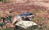 Phát hiện thi thể người phụ nữ trong chiếc va li quấn chặt bằng băng keo
