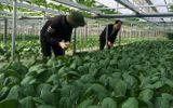 Việc tốt quanh ta - Những bó rau trọn yêu thương từ biên giới gửi về người dân cách ly tại thủ đô Hà Nội
