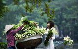 Gia đình - Tình yêu - Hoa loa kèn xuống phố, gợi nhớ về tháng Tư xưa