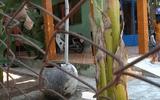 Tin trong nước - Nghi án con trai sát hại cha ở Tiền Giang: Bi kịch tại ngôi nhà ở mép sông