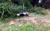 Nam phượt thủ tử vong sau khi tông gãy 2 cọc tiêu quốc lộ