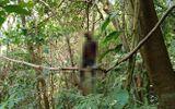 Vụ thi thể nam giới treo cổ trên đèo Bảo Lộc: Xót xa hoàn cảnh của nạn nhân