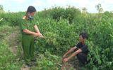 Bất ngờ lời khai của 2 người đàn ông trồng cần sa trong vườn nhà