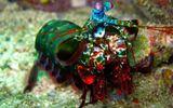 Bí ẩn loài sinh vật có cặp mắt thần kỳ của đại dương, thấy 6 loại ánh sáng phân cực