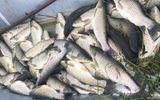 Tin tức thời sự mới nóng nhất hôm nay 26/4/2020: Hàng tấn cá chết trắng trên sông Mã, nghi do yếu tố môi trường
