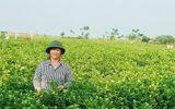 Đảng bộ xã Đông Xuân (Sóc sơn – Hà Nội): Thực hiện thắng lợi Nghị quyết đại hội Đảng bộ nhiệm kỳ 2015-2020
