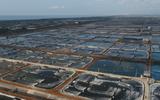 Thực phẩm Sao Ta dự chi hơn 50 tỷ đồng mua vào 2 triệu cổ phiếu quỹ