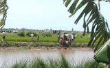 Tin trong nước - Thanh Hóa: Đi mò cua, 2 chị em ruột đuối nước thương tâm