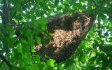Đi lấy mật ong rừng, nguyên cán bộ phường ngã xuống vách núi