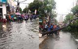 TP.HCM: Mưa lớn kèm dông lốc khiến đường ngập, cây đổ trên nhiều tuyến phố