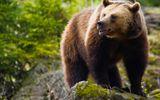 Cộng đồng mạng - Video: Bị gấu bám theo, cậu bé 12 tuổi thoát nạn bằng cách không ngờ
