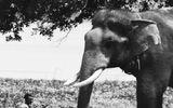 Tin trong nước - Voi húc chết người chăm sóc: Đã đến lúc dừng sử dụng động vật hoang dã phục vụ thương mại