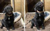 Cộng đồng mạng - Video: Tan chảy trước chú chó nhe răng cười toe toét mỗi lần có người đến nhận nuôi