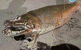 Tin trong nước - Hà Nội: Phát hiện xác cá sấu hỏa tiễn trong Công viên Thống Nhất
