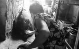 """Đời sống - Chuyện kỳ lạ về hai người phụ nữ cô đơn chăm con heo rừng """"biết khóc, giả chết"""""""