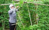 Bí quyết làm giàu - Huyện Tân Lạc - Hòa Bình: Tạo bước đột phá về sản xuất nông nghiệp