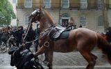 Anh: Nữ cảnh sát kỵ binh bị ngựa hất ngã dập phổi khi đối phó biểu tình