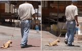 """Tin tức đời sống mới nhất ngày 10/6/2020: Kéo lê chó trên đường, chủ nhận """"quả đắng"""""""