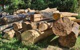 """Vì sao gỗ lậu """"lọt"""" qua trạm kiểm lâm ra khỏi rừng?"""